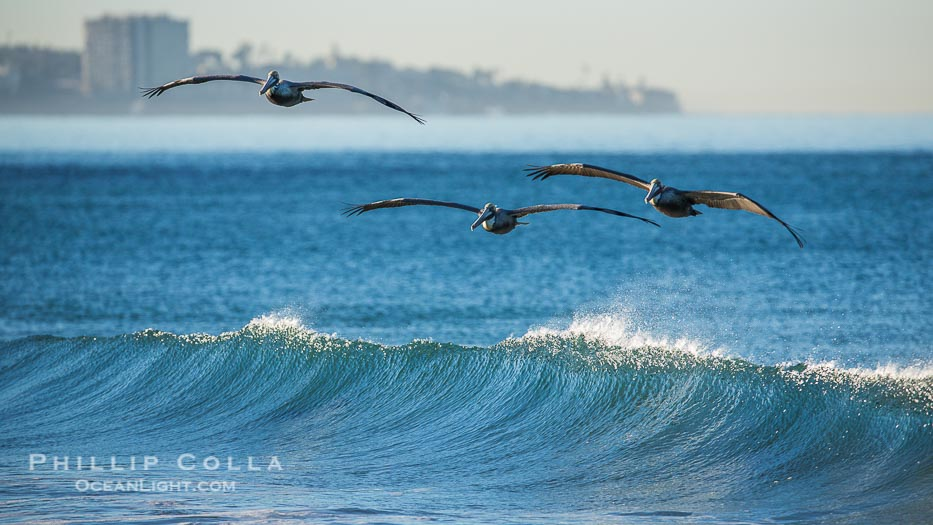 The Original Wind Surfers: Pelicans, Waves and Surf
