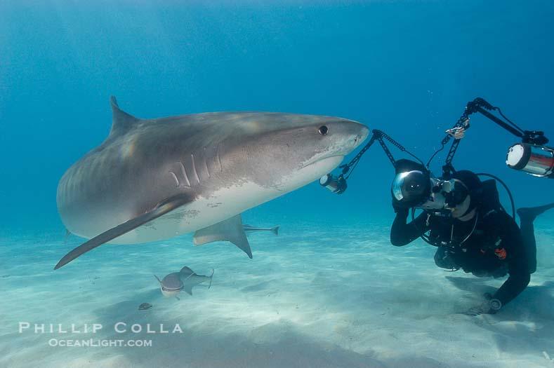 Tiger Shark and Keith Grundy, Northern Bahamas