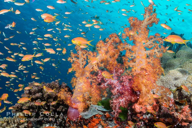 Natural History Photography – Best Photos of 2015