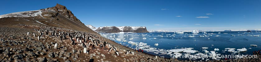 Adelie penguin colony, panoramic photograph, Pygoscelis adeliae, Devil Island