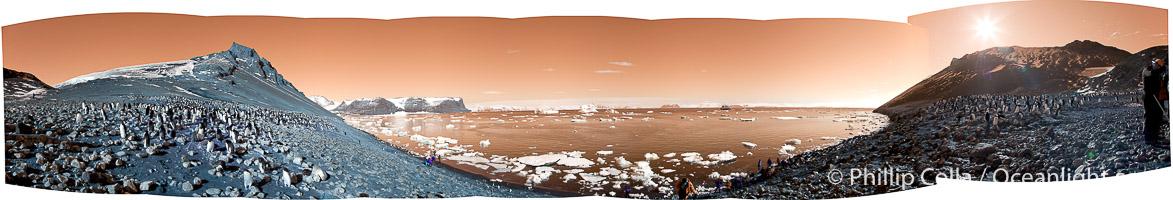 Adelie penguin panorama, Pygoscelis adeliae, Devil Island