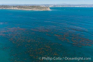 Aerial Photo of Kelp Forests at Cabrillo State Marine Reserve, Point Loma, San Diego. San Diego, California, USA, natural history stock photograph, photo id 30643