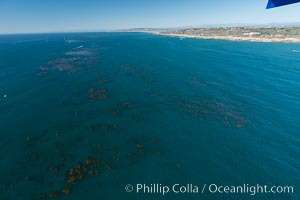Aerial Photo of Kelp Forests at Cabrillo State Marine Reserve, Point Loma, San Diego. San Diego, California, USA, natural history stock photograph, photo id 30698