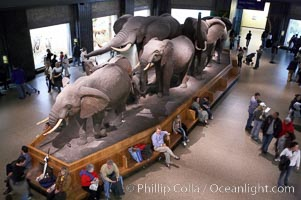 Seen at the American Museum of Natural History. American Museum of Natural History, New York City, New York, USA, natural history stock photograph, photo id 11253