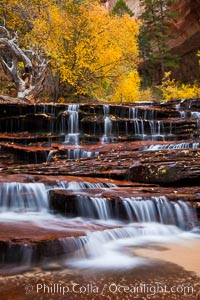Archangel Falls in autumn, near the Subway in North Creek Canyon, with maples and cottonwoods turning fall colors. Zion National Park, Utah, USA, natural history stock photograph, photo id 26134