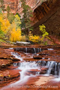 Archangel Falls in autumn, near the Subway in North Creek Canyon, with maples and cottonwoods turning fall colors, Zion National Park, Utah