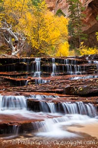 Archangel Falls in autumn, near the Subway in North Creek Canyon, with maples and cottonwoods turning fall colors. Zion National Park, Utah, USA, natural history stock photograph, photo id 26397