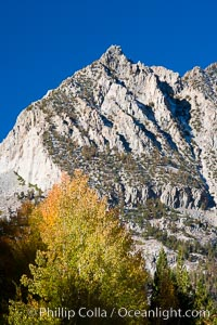 Aspen trees and Sierra Nevada peak, autumn. Bishop Creek Canyon Sierra Nevada Mountains, Bishop, California, USA, Populus tremuloides, natural history stock photograph, photo id 26064