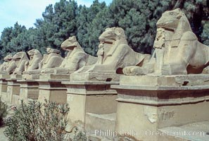 Avenue of Sphinxes approaching the Temple of Amun, part of the Karnak Temple complex, Luxor, Egypt