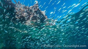Baitfish schooling at the surface, Los Islotes, Sea of Cortez