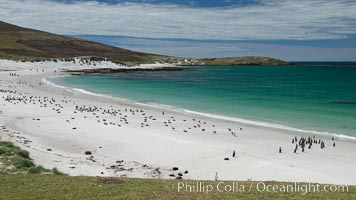 Beautiful white sand beach, on the southern tip of Carcass Island, with gentoo and Magellanic penguins coming and going to sea. Carcass Island, Falkland Islands, United Kingdom, natural history stock photograph, photo id 24010