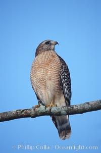 Unidentified bird, Homosassa River