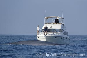 An enormous blue whale swims in front of whale watchers on a private yacht.  Only a small portion of the whale, which dwarfs the boat and may be 70 feet or more in length, can be seen. Open ocean offshore of San Diego, Balaenoptera musculus