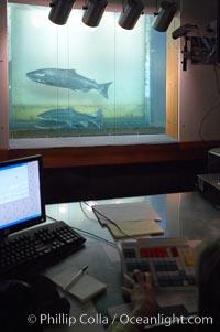 Bonneville dam photo bonneville dam photos phillip colla for Bonneville fish counts