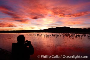 A photographer looks on the back of his camera to view his perfect image of yet another beautiful sunset at Bosque del Apache National Wildlife Refuge. Bosque del Apache National Wildlife Refuge, Socorro, New Mexico, USA, Grus canadensis, natural history stock photograph, photo id 21857