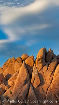 Boulders and sunset in Joshua Tree National Park.  The warm sunlight gently lights unusual boulder formations at Jumbo Rocks in Joshua Tree National Park, California. Joshua Tree National Park, California, USA, natural history stock photograph, photo id 26743
