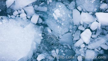 Brash ice floats on cold, dark Antarctic waters, Cierva Cove