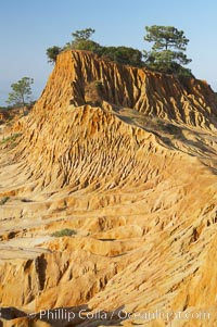 Broken Hill is an ancient, compacted sand dune that was uplifted to its present location and is now eroding. Torrey Pines State Reserve, San Diego, California, USA