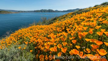 California Poppies, Diamond Valley Lake, Hemet. Hemet, California, USA, natural history stock photograph, photo id 33134