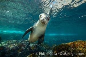 California sea lion, Coronados Islands, Baja California, Mexico, Zalophus californianus, Coronado Islands (Islas Coronado)