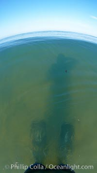 Guy stands in shallow water wearing his long fins, takes photo of his shadow, Cardiff by the Sea, California
