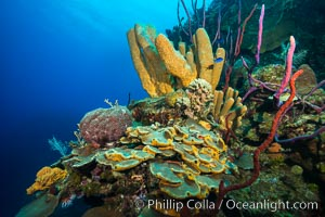 Beautiful Caribbean coral reef, sponges and hard corals, Grand Cayman Island. Grand Cayman, Cayman Islands, natural history stock photograph, photo id 32101