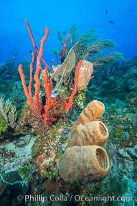 Beautiful Caribbean coral reef, sponges and hard corals, Grand Cayman Island