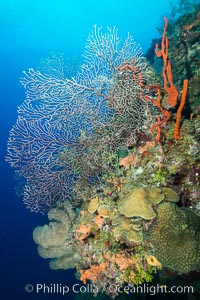 Beautiful Caribbean coral reef, sponges and hard corals, Grand Cayman Island. Grand Cayman, Cayman Islands, natural history stock photograph, photo id 32198