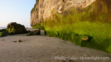 Algae grows along the base of soft eroded sandstone cliffs at the beach, Carlsbad, California