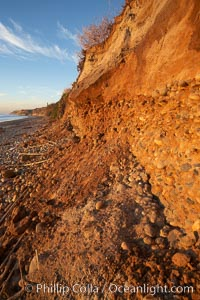 Beach cliffs made of soft clay continually erode, adding fresh sand and cobble stones to the beach.  The sand will flow away with ocean currents, leading for further erosion of the cliffs, Carlsbad, California