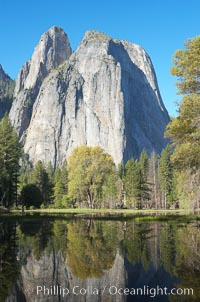 Cathedral Rocks is reflected in flooded El Capitan Meadow, springtime morning.  Yosemite Valley, Yosemite National Park, California