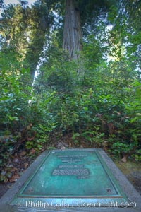 Commemoration plaque in Lady Bird Johnson Grove, marking the place where President Richard Nixon dedicated this coastal redwood grove to Lady Bird Johnson, an environmental activist and former first lady, Sequoia sempervirens, Redwood National Park, California