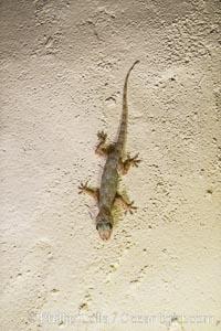 Cool little Gecko on the wall of my room in Elsa's Kopje Safari Lodge, Meru National Park, Kenya