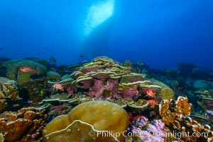Coral Reef, Clipperton Island. Clipperton Island, France, natural history stock photograph, photo id 32994