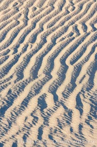 Ripples in sand dunes at sunset, California.  Winds reshape the dunes each day.  Early morning walks among the dunes can yield a look at sidewinder and kangaroo rats tracks the nocturnal desert animals leave behind. Stovepipe Wells, Death Valley National Park, California, USA, natural history stock photograph, photo id 15604