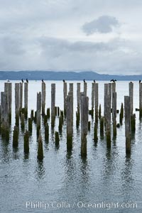 Derelict pilings, remnants of long abandoned piers, Columbia River, Astoria, Oregon