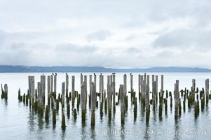 Derelicts pilings, remnants of long abandoned piers, Columbia River, Astoria, Oregon