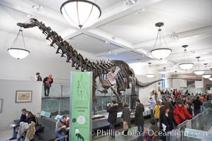 Seen at the American Museum of Natural History. American Museum of Natural History, New York City, New York, USA, natural history stock photograph, photo id 11250