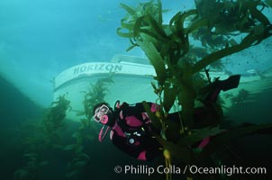 Diver amidst kelp forest, San Clemente Island