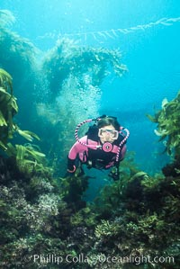 Diver and reef. San Clemente Island, California, USA, natural history stock photograph, photo id 01101