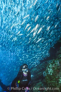 Diver and schooling fish. Galapagos Islands, Ecuador, natural history stock photograph, photo id 03478