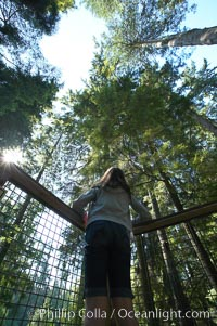 Douglas fir and Western hemlock trees reach for the sky in a British Columbia temperate rainforest, Capilano Suspension Bridge, Vancouver, Canada