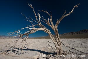 Dried tree and barren, arid mud flats, Eureka Valley, Death Valley National Park, California