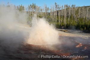 Echinus Geyser erupts at sunset.  Echinus Geyser reaches heights of 40 to 60 feet.  Echinus Geyser was quite predictable until 1998 when something changed in its plumbing, and it now is irregular and erupts less often, Norris Geyser Basin, Yellowstone National Park, Wyoming