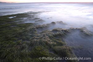 Eel grass awash low tide, at sunset, Torrey Pines State Reserve, San Diego, California
