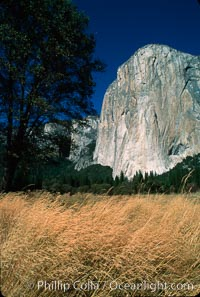 El Capitan, autumn. El Capitan, Yosemite National Park, California, USA, natural history stock photograph, photo id 02329