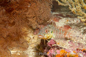 Unidentified fish, Epinephelus, Cousins