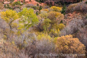 Fall Colors, Kolob Canyon, Zion National Park