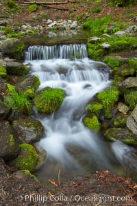 Fern Springs, a small natural spring in Yosemite Valley near the Pohono Bridge, trickles quietly over rocks as it flows into the Merced River, Yosemite National Park, California
