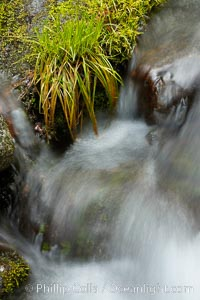 Fern Springs, a small natural spring in Yosemite Valley near the Pohono Bridge, trickles quietly over rocks as it flows into the Merced River. Yosemite Valley, Yosemite National Park, California
